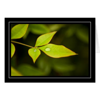 Rain Drops on Tree Leaves Note Card