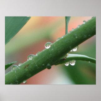 Rain Drops Print