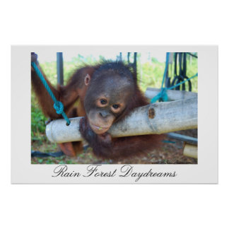 Rain Forest Great Ape Daydreams Poster