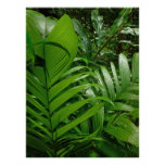 Rain Forest Palms Poster