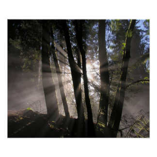 Rain Forest Sun Rays Posters