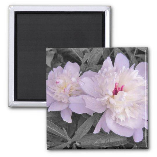 Rain Kissed Peonies Magnet