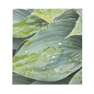rain on leaves notepad