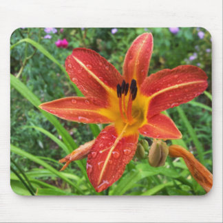 rain on lily mouse pad