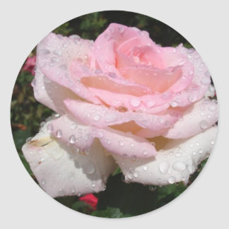 Rain -Sprinkled Rose Round Sticker