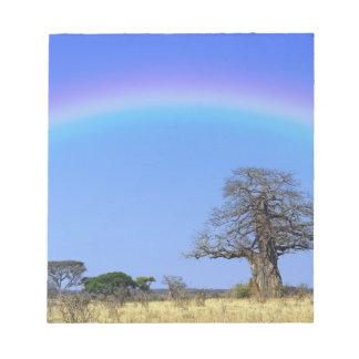 Rainbow and African baobab tree, Adansonia Notepad