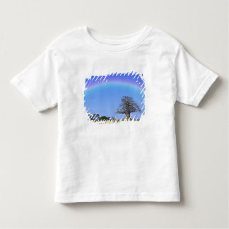 Rainbow and African baobab tree, Adansonia Toddler T-Shirt