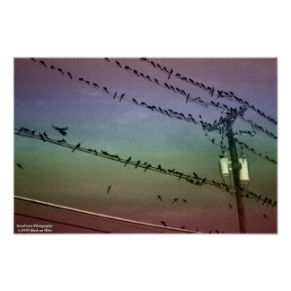 Rainbow Birds on Wires Poster