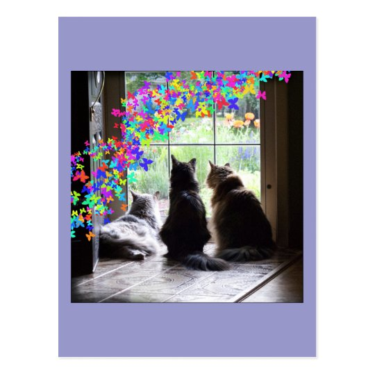 Rainbow Bridge cat condolence postcard