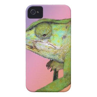 Rainbow chameleon iPhone 4 case