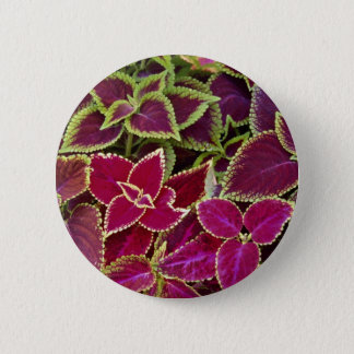 Rainbow coleus 6 cm round badge