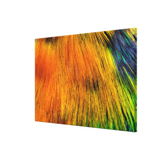 Rainbow Colored Feather Abstract Canvas Print