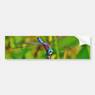 Rainbow Dragonfly and flower Bumper Sticker