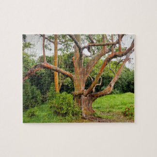 Rainbow Eucalyptus Trees, Maui, Hawaii, USA Jigsaw Puzzle