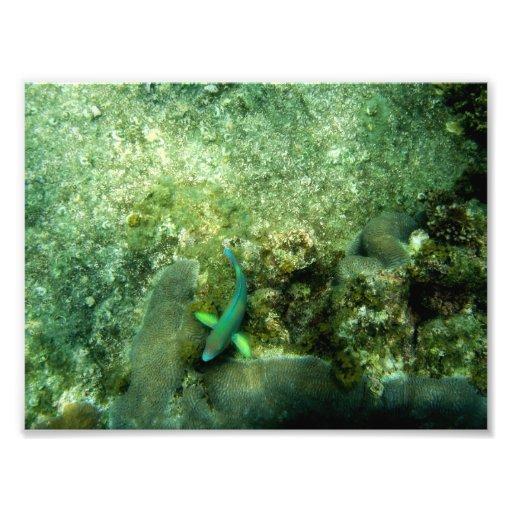 Rainbow Fish underwater in Ko Tao Thailand Photographic Print