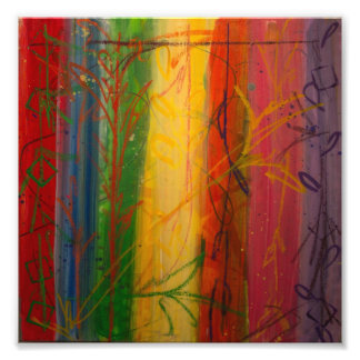 Rainbow Forrest by Bryce & Mary Photo Print
