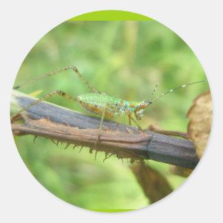 Rainbow Grasshopper Stickers