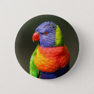 Rainbow Lorikeet 6 Cm Round Badge
