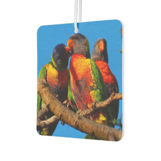 Rainbow Lorikeet air freshener