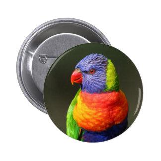 Rainbow Lorikeet Pinback Buttons