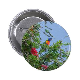 Rainbow Lorikeet Pinback Button