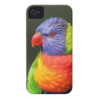 Rainbow Lorikeet iPhone 4 Cover