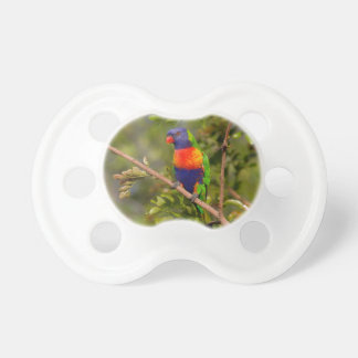 Rainbow lorikeet dummy