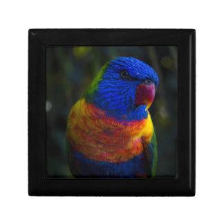 Rainbow Lorikeet Gift Box