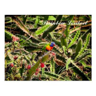 Rainbow Lorikeet in cactus postcard