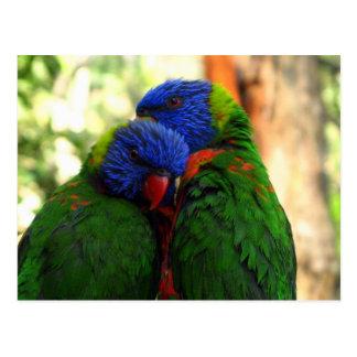 Rainbow Lorikeet in Love Postcard