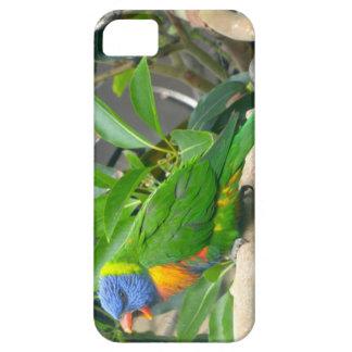 Rainbow Lorikeet iPhone 5 Case