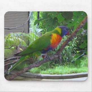 Rainbow Lorikeet Mouse Pad