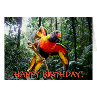Rainbow lorikeet parrot customizable birthday card