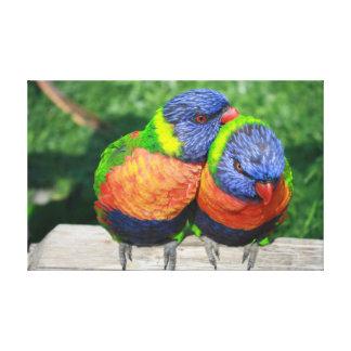Rainbow Lorikeet parrots couple Gallery Wrap Canvas
