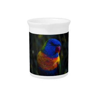 Rainbow Lorikeet Pitcher