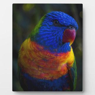Rainbow Lorikeet Plaque