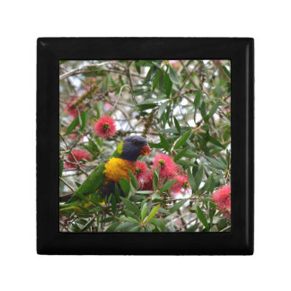 RAINBOW LORIKEET RURAL QUEENSLAND AUSTRALIA GIFT BOX