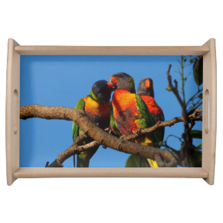 Rainbow Lorikeet serving tray
