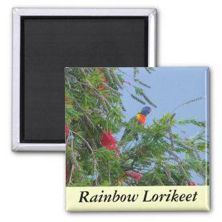 Rainbow Lorikeet Square Magnet
