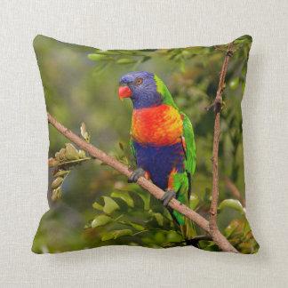 Rainbow Lorikeet Throw Cushions