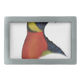 rainbow lorikeet, tony fernandes belt buckles