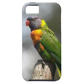 Rainbow Lorikeet (Trichoglossus haematodus iPhone 5 Cover
