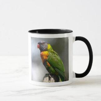 Rainbow Lorikeet (Trichoglossus haematodus Mug