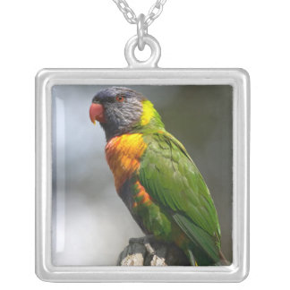 Rainbow Lorikeet (Trichoglossus haematodus Silver Plated Necklace