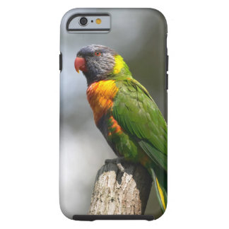 Rainbow Lorikeet (Trichoglossus haematodus Tough iPhone 6 Case