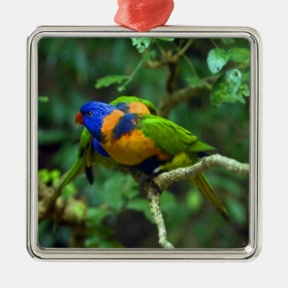 Rainbow Lorikeets Christmas Ornament