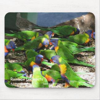 Rainbow Lorikeets Mouse Pad