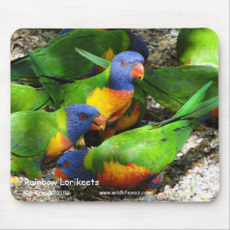 Rainbow Lorikeets Mouse Pads