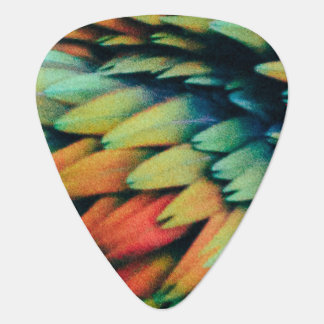 Rainbow of Colorful Bird Feathers Plectrum