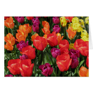 Rainbow Of Tulips Note Card